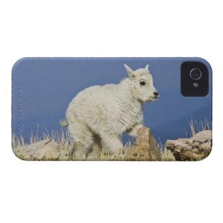 Mountain Goat (Oreamnos americanus) kid or baby iPhone 4 Case-Mate Case