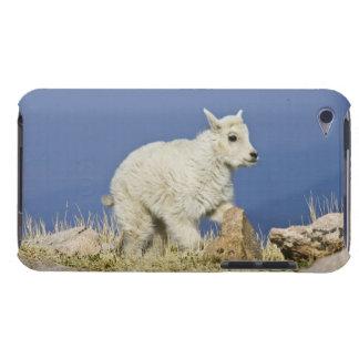 Mountain Goat (Oreamnos americanus) kid or baby iPod Case-Mate Cases