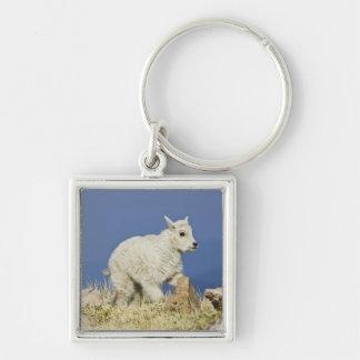 Mountain Goat (Oreamnos americanus) kid or baby Key Chains