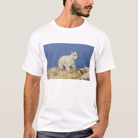 Mountain Goat (Oreamnos americanus) kid or baby T-Shirt