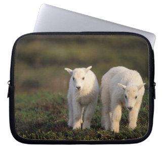 mountain goat, Oreamnos americanus, pair of Laptop Sleeve