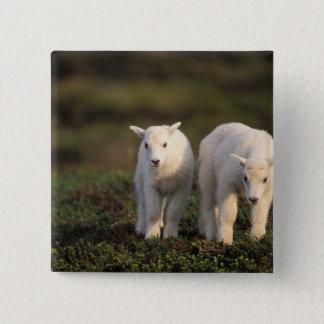 mountain goat, Oreamnos americanus, pair of Pinback Button