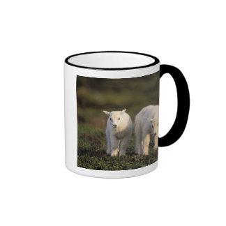 mountain goat, Oreamnos americanus, pair of Ringer Mug
