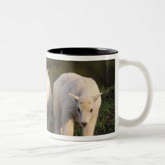 mountain goat, Oreamnos americanus, pair of Two-Tone Coffee Mug