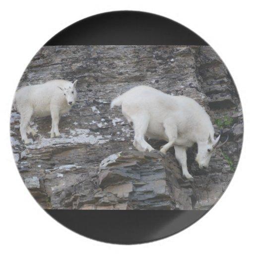 mountain goat plates