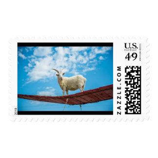 Mountain Goat Stamp