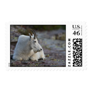 Mountain Goat Stamps