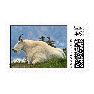 Mountain Goat Postage Stamp