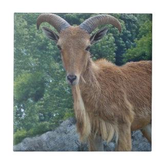Mountain Goat Tile