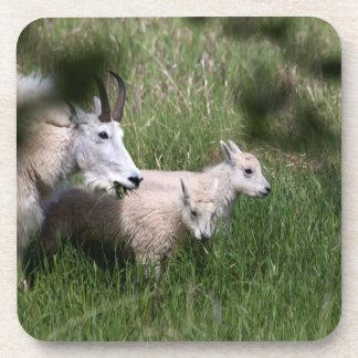 Mountain Goat Twins Coaster