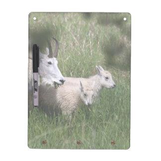 Mountain Goat Twins Dry-Erase Board