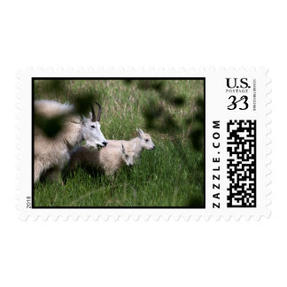 Mountain Goat Twins Postage Stamp