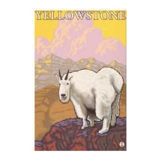 Mountain Goat - Yellowstone National Park Canvas Print