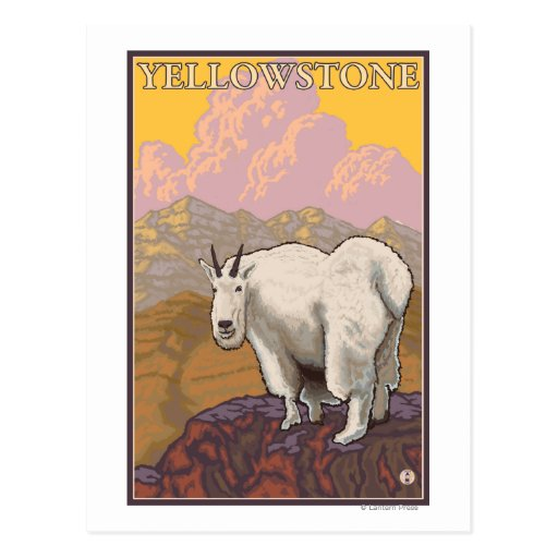 Mountain Goat - Yellowstone National Park Post Card