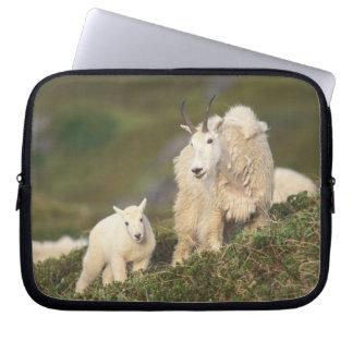 mountain goats, Oreamnos americanus, mother and 2 Computer Sleeve
