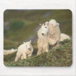 mountain goats, Oreamnos americanus, mother and 2 Mouse Pads