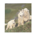 mountain goats, Oreamnos americanus, mother and 2 Memo Notepads