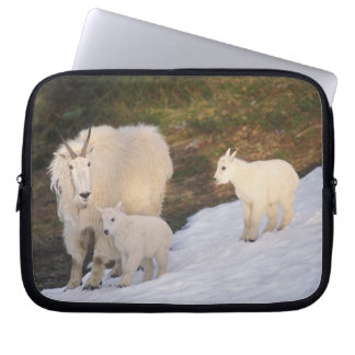 mountain goats, Oreamnos americanus, mother and Laptop Sleeve