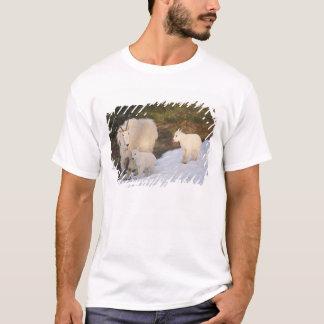 mountain goats, Oreamnos americanus, mother and T-Shirt