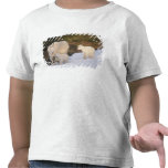 mountain goats, Oreamnos americanus, mother and Tshirts