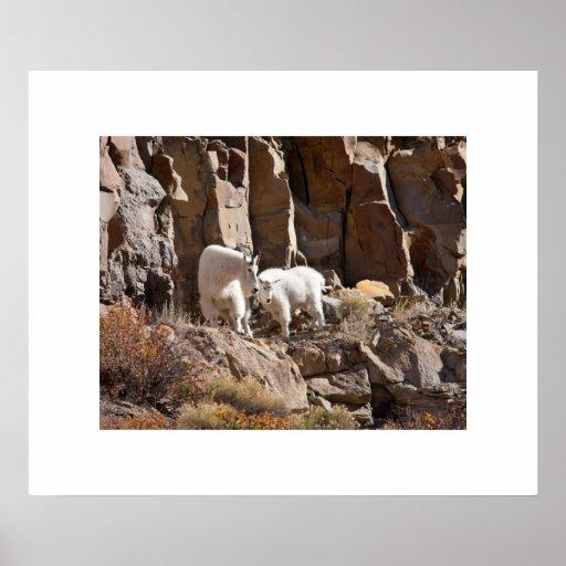 Mountain Goats Print