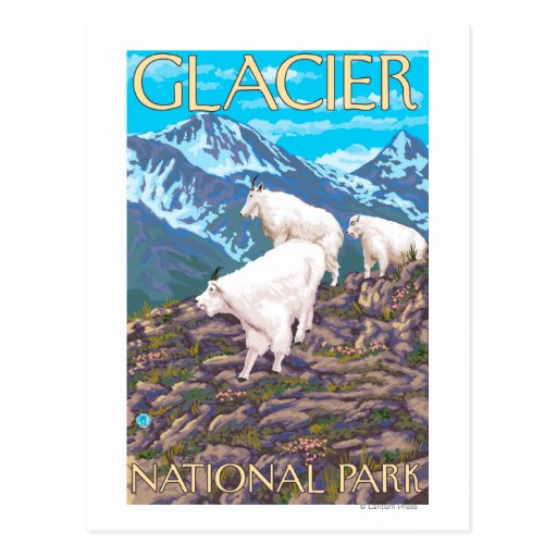 Mountain Goats Scene - Glacier National Park, Post Cards