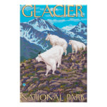 Mountain Goats Scene - Glacier National Park, Poster