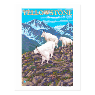 Mountain Goats Scene - Yellowstone National Park Postcard