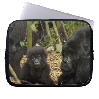 Mountain Gorilla, adult with young 2 Computer Sleeve