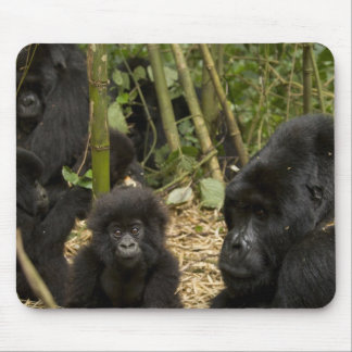 Mountain Gorilla, adult with young 2 Mouse Pad