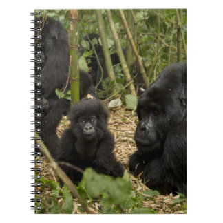 Mountain Gorilla, adult with young 2 Note Books