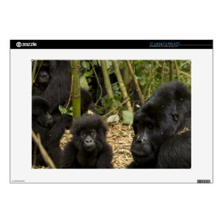 Mountain Gorilla, adult with young 2 Skins For Laptops