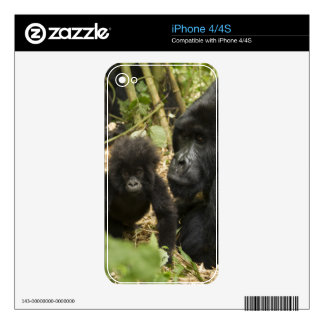Mountain Gorilla, adult with young Decal For iPhone 4