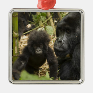 Mountain Gorilla, adult with young Metal Ornament
