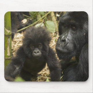 Mountain Gorilla, adult with young Mouse Pad