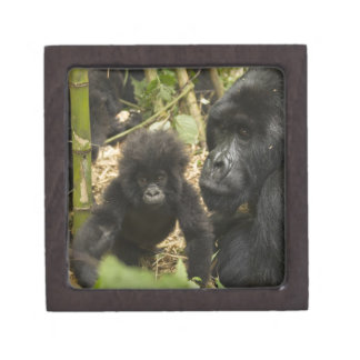 Mountain Gorilla, adult with young Premium Trinket Boxes