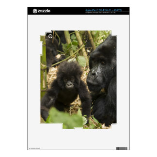 Mountain Gorilla, adult with young Skin For iPad 3