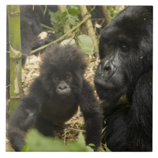 Mountain Gorilla, adult with young Tile