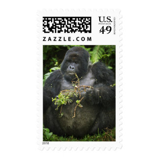 Mountain Gorilla and aging Silverback 2 Stamp