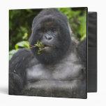 Mountain Gorilla and aging Silverback 3 Ring Binder