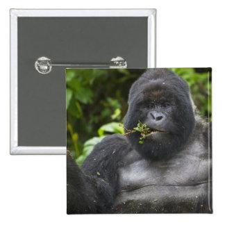 Mountain Gorilla and aging Silverback Button