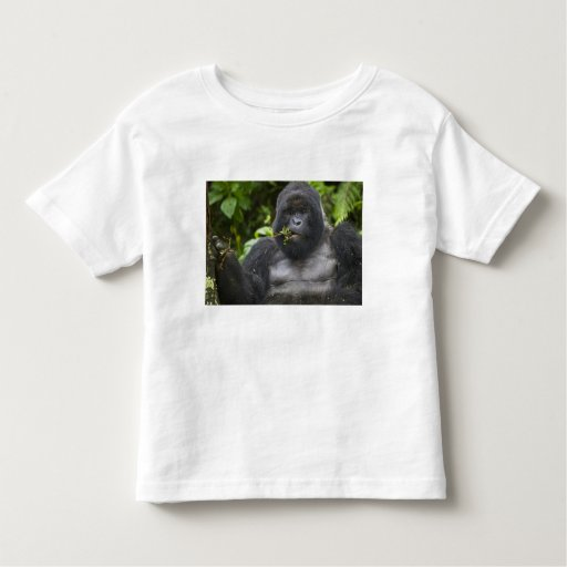 Mountain Gorilla and aging Silverback Tshirts