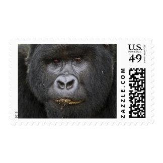 Mountain Gorilla and Silverback 2 Stamp