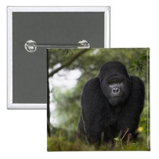 Mountain Gorilla and Silverback 3 Button