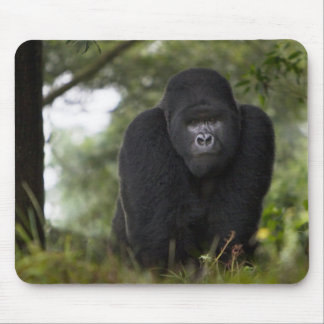 Mountain Gorilla and Silverback 3 Mouse Pad