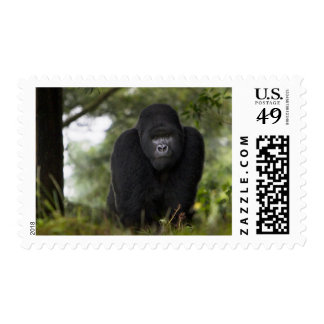 Mountain Gorilla and Silverback 3 Stamps