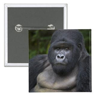 Mountain Gorilla and Silverback 4 Pinback Button