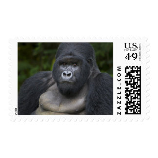 Mountain Gorilla and Silverback 4 Stamps
