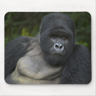 Mountain Gorilla and Silverback 5 Mouse Pad