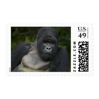 Mountain Gorilla and Silverback 5 Stamp